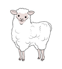 funny sheep draw