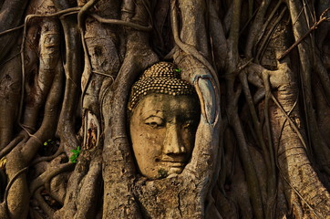 THE ROOTS AROUND THE HEAD OF BUDDHA IMAGE