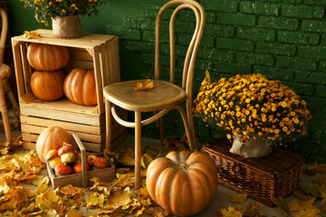 Beautiful autumn composition with wooden furniture, pumpkins and leaves near color wall