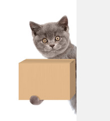 cat with a cardboard box in his paws behind white banner. isolated on white background