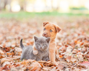 homeless puppy hugging a sad kitten on autumn leaves