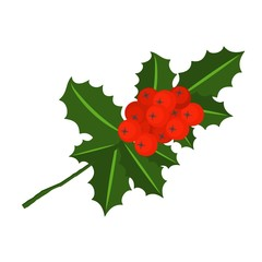 Holly berry branch. Leaves for traditional ornamental wreath from plants for greeting cards for for Merry Christmas and Happy New Year.