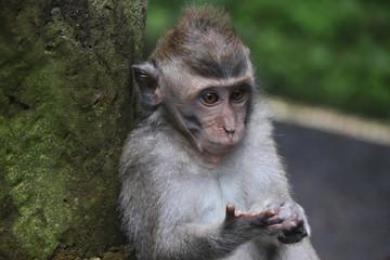 cute baby ape monkey primate