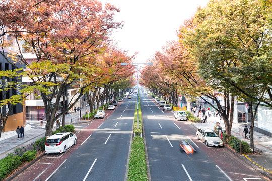 (東京都ー都市風景)並木道が赤く染まる表参道10