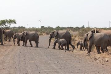Afrika Botswana Natur Tiere