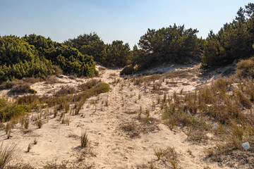 Greek Beach Landscape - Dunes