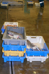 Guilvinec France, 10 15 2018. Fishs in box at the fish market of Guilvinec harbor. Brittany France