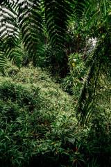 Costa Rica 2016 - Volcano Poas