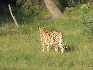 Afrika Tiere Natur