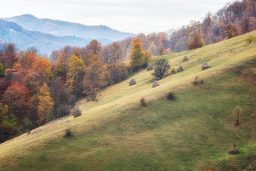 Autumn forest / Amazing autumn view of a mountain meadow with colorful forest and haystacks