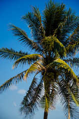 green leaves of tropical palm. blue sky
