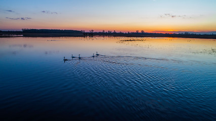 Animals on the backwaters at sunset