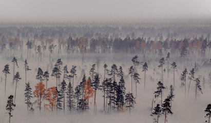 Foto op Canvas Ochtendstond met mist Forest and creeping fog. The view from the height of bird