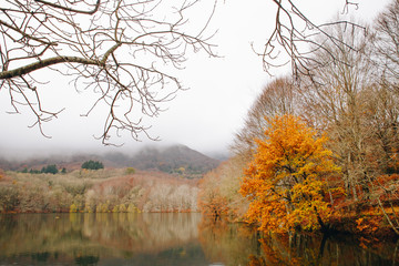 Autumn Landscape of lake and forest
