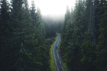 Road in the moody forest