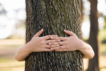 Closeup hands of woman hugging tree with sunlight