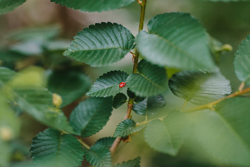 Red insect on green leaves.