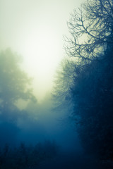 Enchanted Dawn Sky at Dark Wood / Silhouette of trees in dark, misty, mysterious forest, bright shine at horizon (copy space)