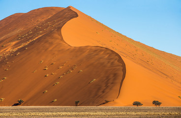 Dunes of the Sossusvlei. Beautiful shapes. Stunning light and color. Africa. Landscapes of Namibia. Sossusvlei. Namib-Naukluft National Park.