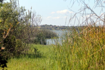 View on Lake Corpus Christi from the trail in Lake Corpus Christi State Park, Texas
