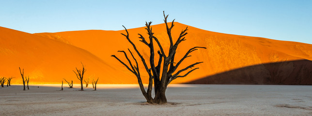 Foto op Aluminium Droogte Dead acacia Trees and red dunes in Deadvlei. Sossusvlei. Namib-Naukluft National Park, Namibia.