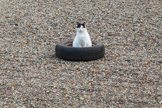 Cat in wheels.