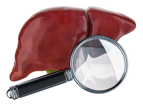 Human liver with magnifying glass. Research and diagnosis of liver concept, 3D rendering