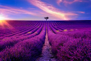 Lavendelfeld in der Provence bei Sonnenuntergang
