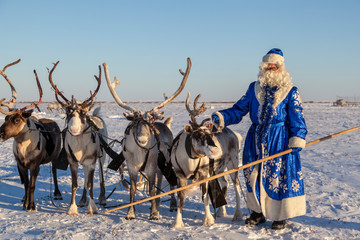 Christmas theme, sales, Happy  Santa Claus in a snowy forest, Santa on the background of a winter forest, Russian Santa Claus (Grandfather Frost), Santa Claus are near his reindeers in harness.