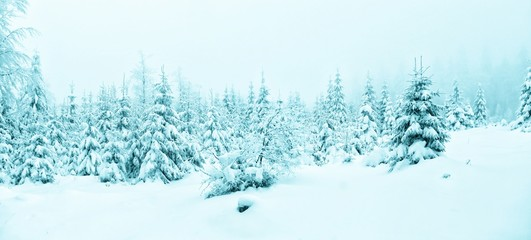 Beautiful winter landscape with fresh snow covered spruce trees