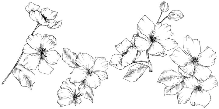 Vector. Appe blossom flowers. Wild spring leaf. Isolated apple b