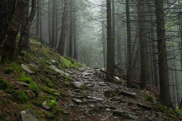 Forest mountain path in the mountains. The road to the beautiful forest. The road with stones in the Carpathian Mountains. Traveling on a mountain trail.