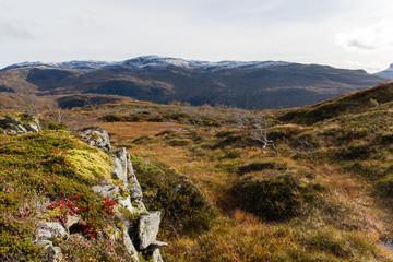 norwegische Graslandschaft mit angezuckertem Bergrücken und roten Blumen