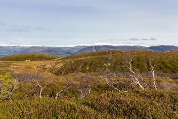 Kahle Sträucher in norwegischer Graslandschaft