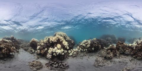 360 of coral bleaching on reef