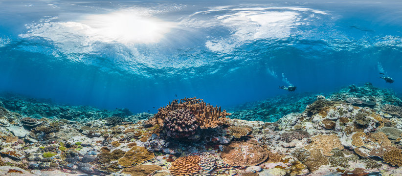 360 Photo of a scuba diver on healthy coral reef in American Samoa with fish swimming