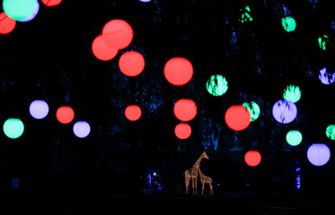 An illuminated sculpture of a giraffe that is part of 'Christmas at London Zoo', is seen at the ZSL London Zoo in London