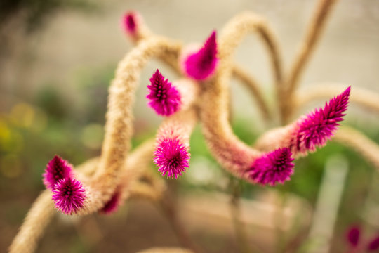 Long arms of strange prickly plant extend into blurred background