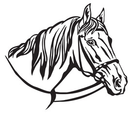 Decorative portrait of horse vector illustration 7