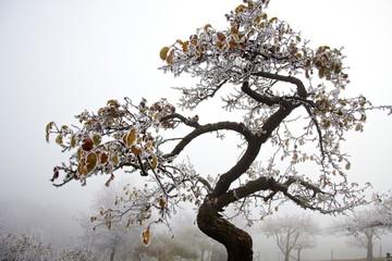 winter tree golden leaves frost snow
