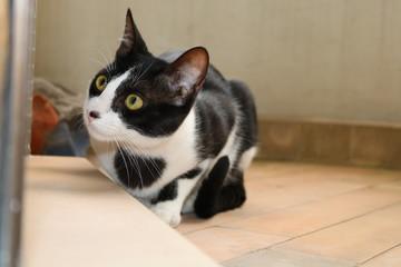 Gato com olho verde