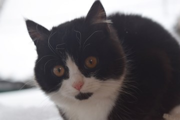 Cute fluffy cat on a walk. House pet