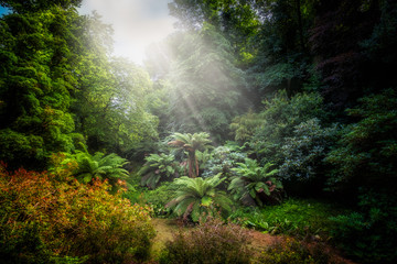 Woodland with tropical semi tropical trees