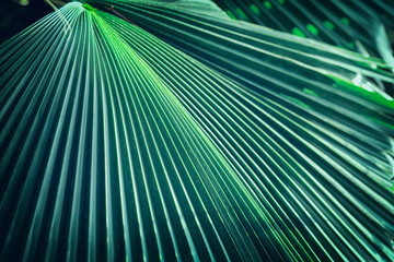 Tropical palm leaf close-up. Exotic geometric green background, jungle botanical pattern, jungle texture