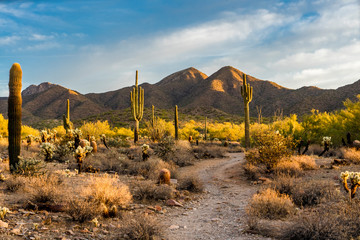 Zelfklevend Fotobehang Arizona Morning light in the Sonoran desert in Scottsdale, Arizona