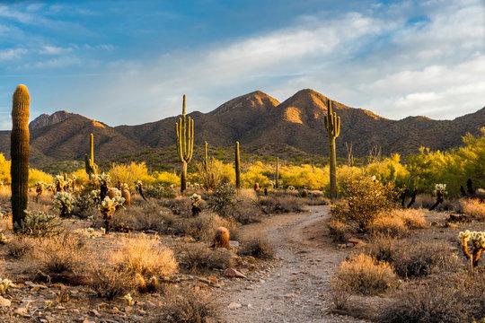 Morning light in the Sonoran desert in Scottsdale, Arizona