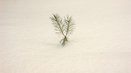 a small pine tree in the snow