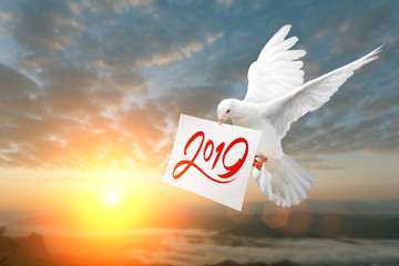 Wall Mural - White Dove carrying 2019 Text in dry brush free hand Style on White paper in Sunset and Happy New Year 2019 Concept
