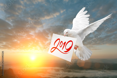 Canvas Prints White Dove carrying 2019 Text in dry brush free hand Style on White paper in Sunset and Happy New Year 2019 Concept