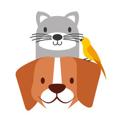 pets dog and cat canary bird